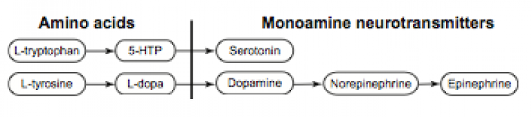 synthesis pathway of serotonin and catecholamines