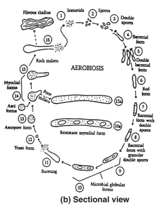 Aerobiosis Chart
